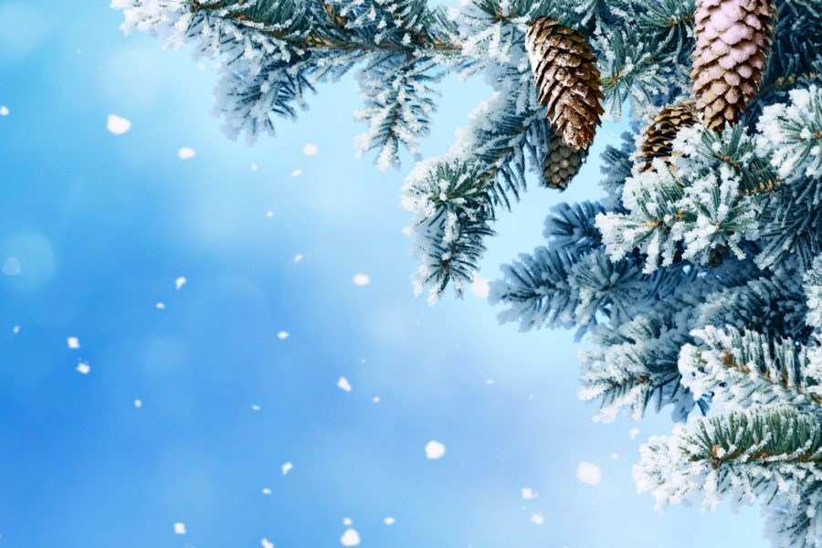 Как сохранить Новогоднюю елку?