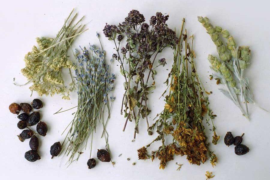 Растения, способные помочь бросить курить