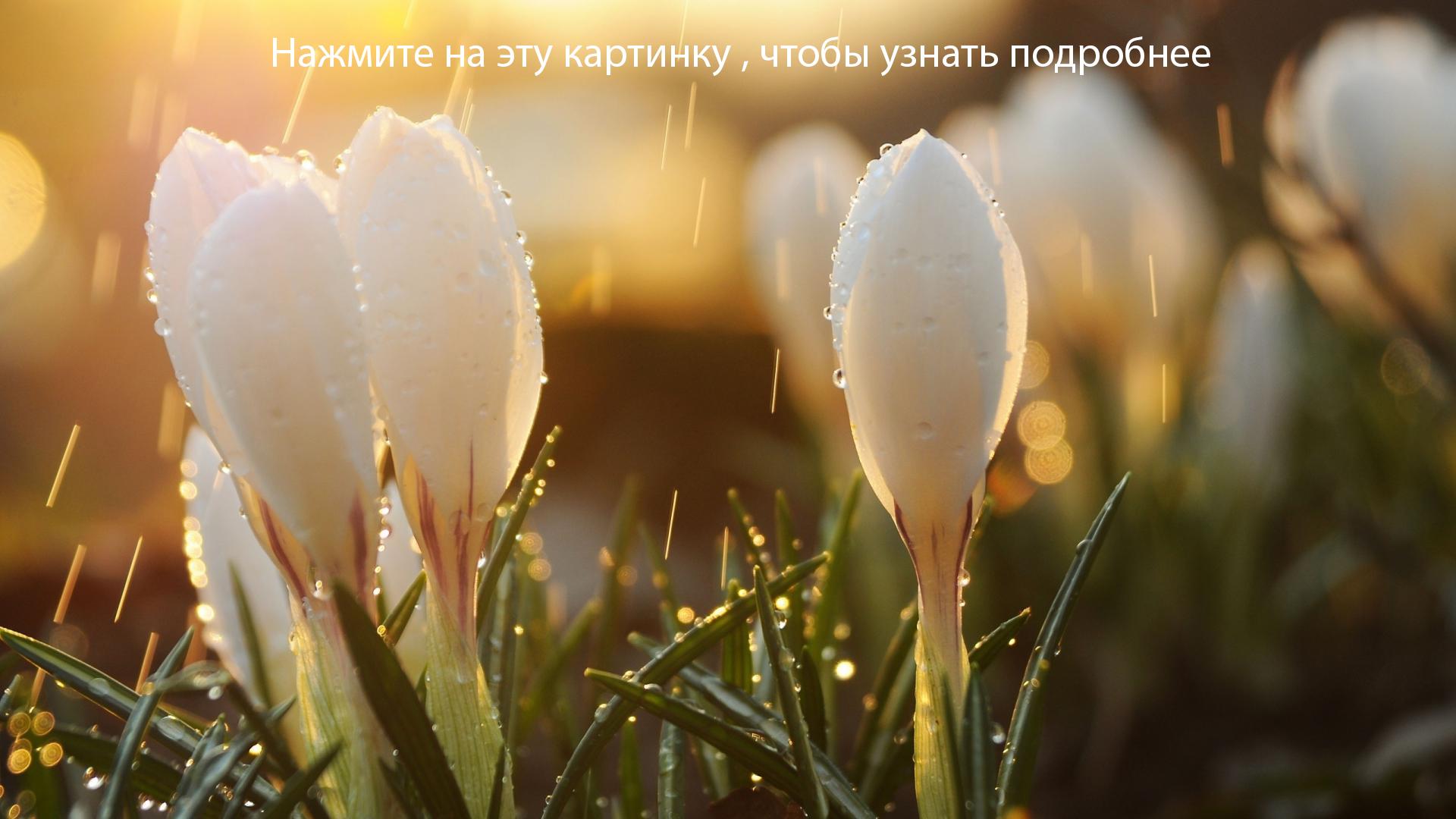 Весна-пантелеймон4-1