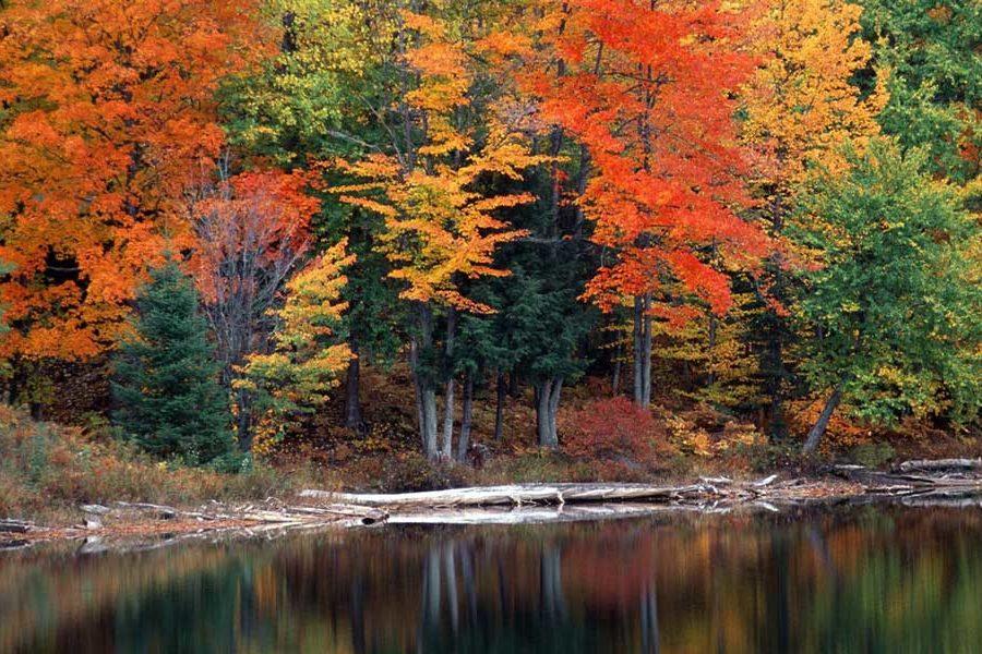 Как прекрасен этот лес!