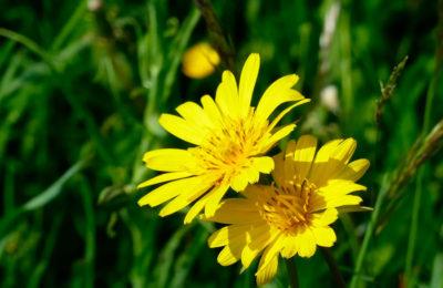 Лекарственные растения, которые должны расти на вашей грядке