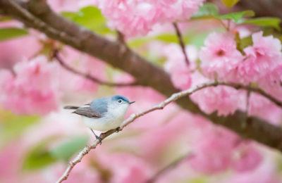 Когда поют птицы, болезни уходят!