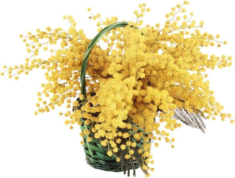 Цветок 8 марта