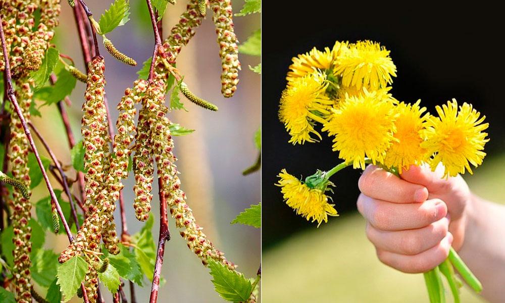 Лекарственные травы в марте и апреле