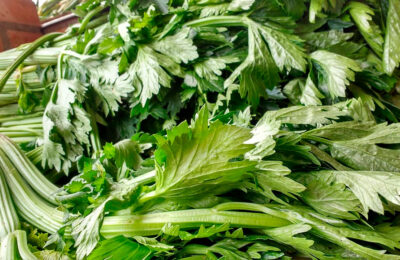 Чай из сельдерея: живём, не болея